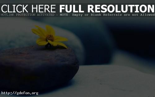 Обои Большие — желтый цветок на камне фото картики заставки