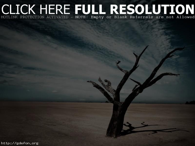 Обои пустыня, дерево, тень, облака фото картики заставки