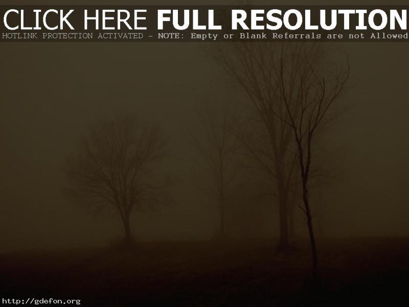 Обои Деревья в тумане фото картики заставки