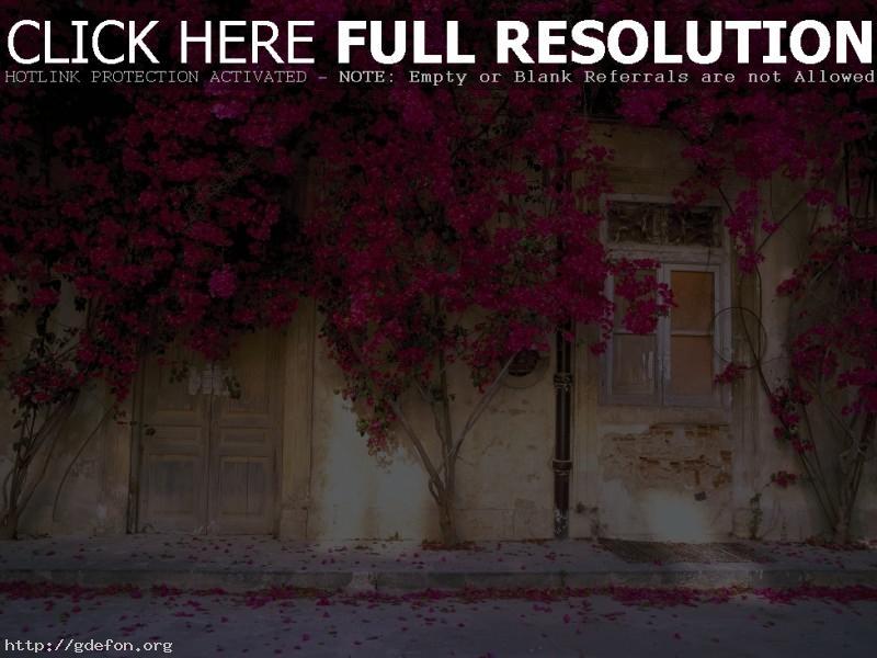 Обои Цветущий дом фото картики заставки