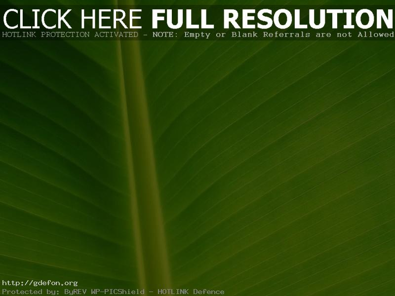 Обои Зеленый лист растения фото картики заставки