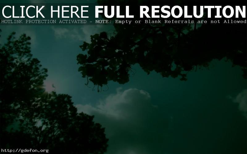 Обои зелень, деревья, солнце фото картики заставки