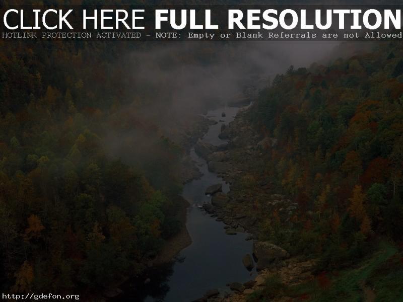Обои Лес, деревья, река, туман фото картики заставки