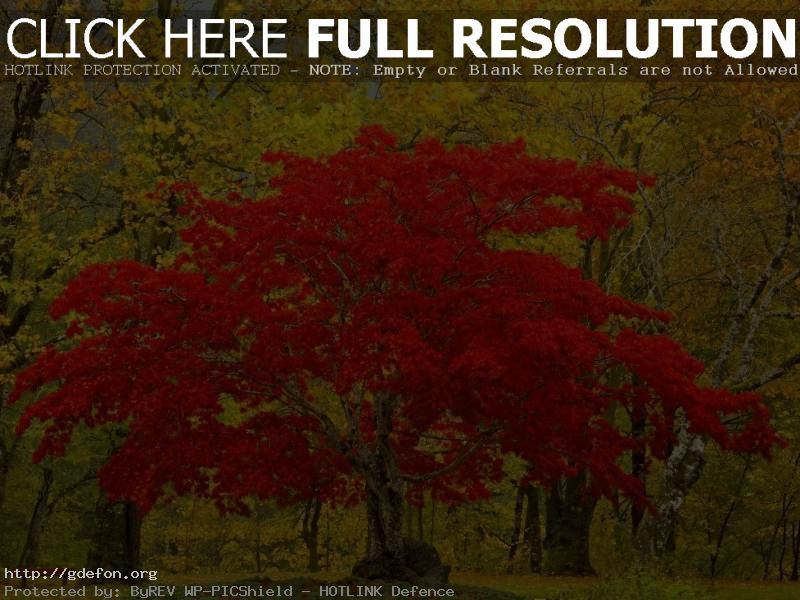 Обои Лес, дерево, листья, природа фото картики заставки