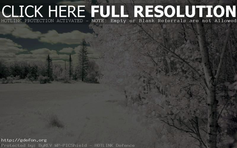 Обои Белоснежная зима фото картики заставки