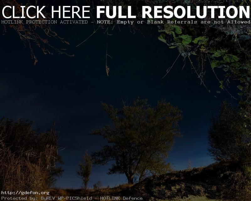 Обои Деревья, отражение, трава фото картики заставки