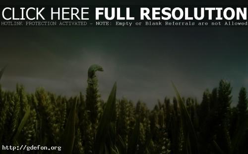 Обои Хамелеон на плантации фото картики заставки