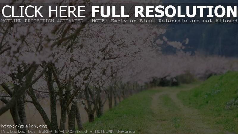 Обои пейзаж, дорога, деревья, весна фото картики заставки