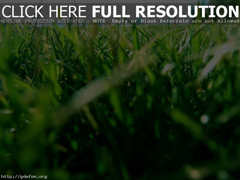Обои Трава, газон, зелень фото картики заставки