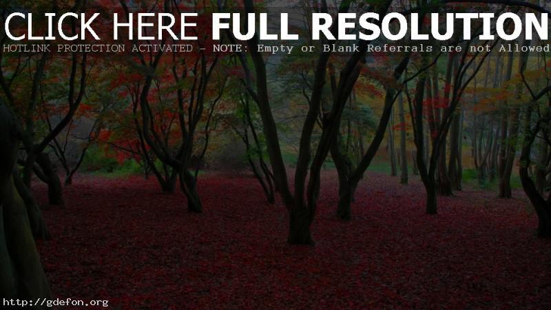 Обои Осень, листва, деревья фото картики заставки