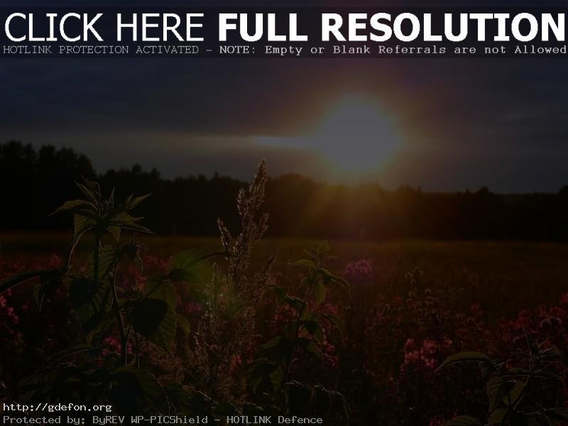 Обои Закат, небо, солнце, поле, цветы фото картики заставки