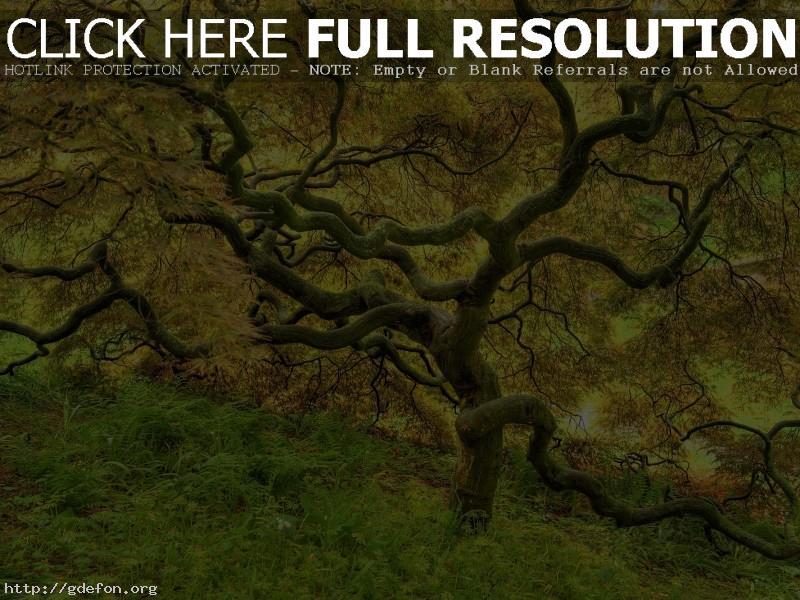Обои Красивое желтое дерево фото картики заставки