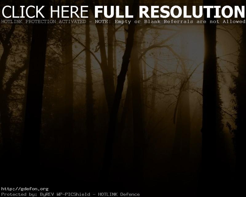 Обои Деревья, туман, сепия, мрак фото картики заставки