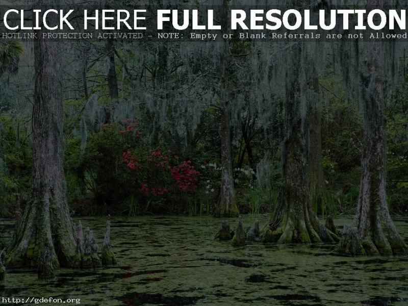 Обои Болотистый лес фото картики заставки