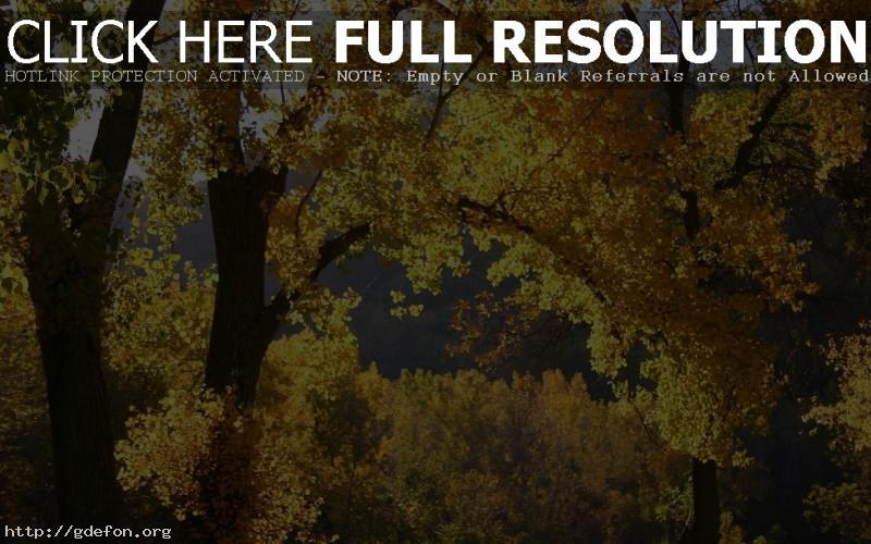 Обои Природа, осень, листья фото картики заставки