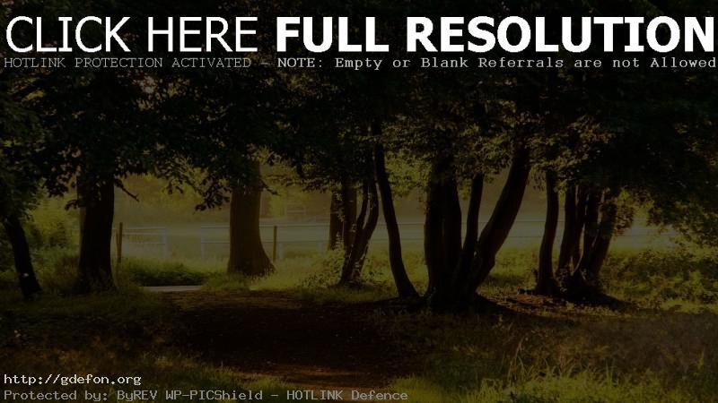 Обои Природа, деревья, парк фото картики заставки