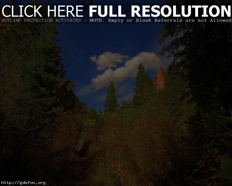 Обои Деревья, облака, тропа, зеленый, лето фото картики заставки