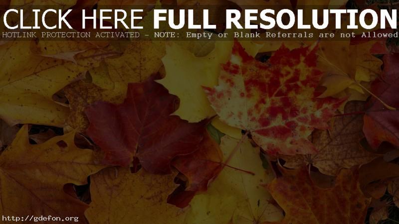 Обои Осень, листы, желтый, клен фото картики заставки