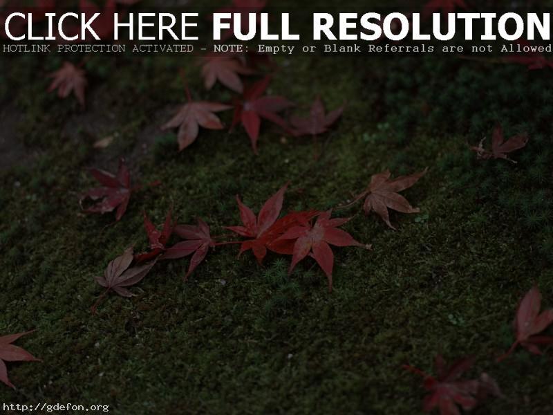 Обои Япония, трава, листья фото картики заставки