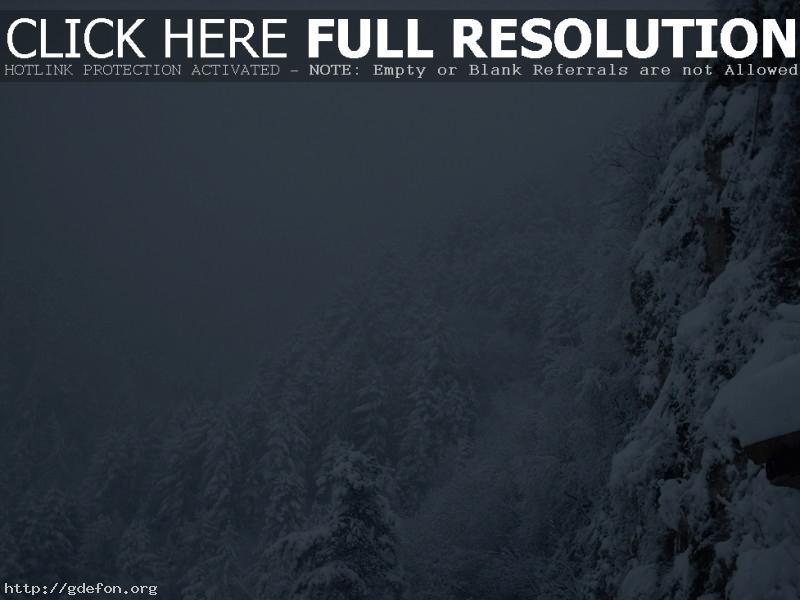 Обои Снег, зима, метель, лес фото картики заставки