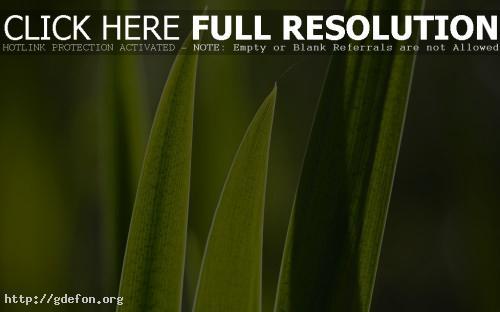 Обои Зеленая трава крупным планом фото картики заставки