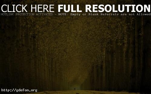 Обои Золотистая тропинка в осеннем парке фото картики заставки