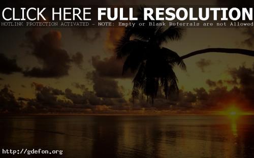 Обои Пальма и закат фото картики заставки