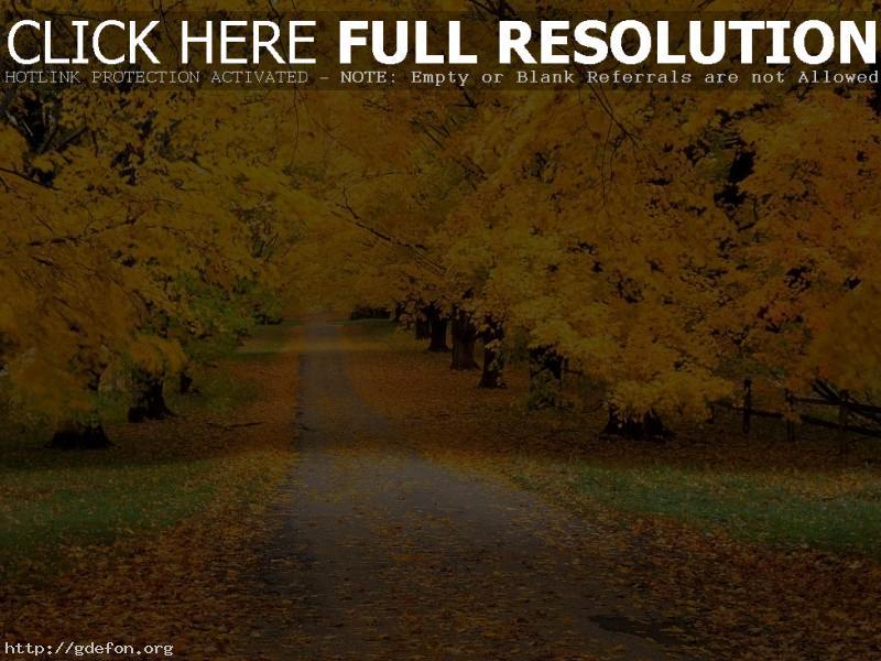 Обои Осень, дорога, парк фото картики заставки
