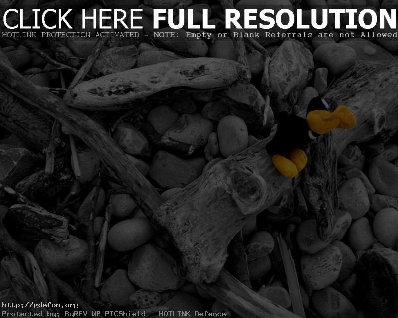 Обои Камни, ветки, игрушка, цвет, черно-белае фото картики заставки