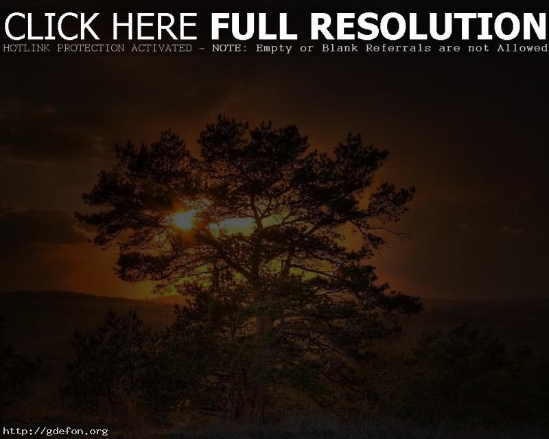 Обои Дерево, солнце, закат фото картики заставки
