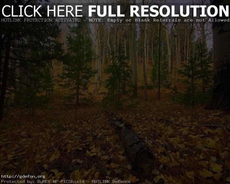 Обои Лес, осень, деревья фото картики заставки