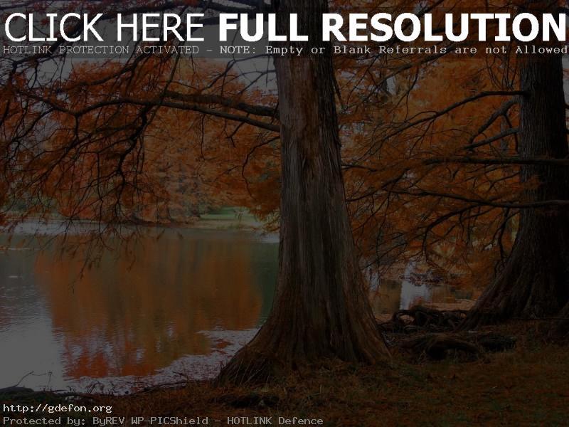 Обои Дерево, осень, озеро фото картики заставки