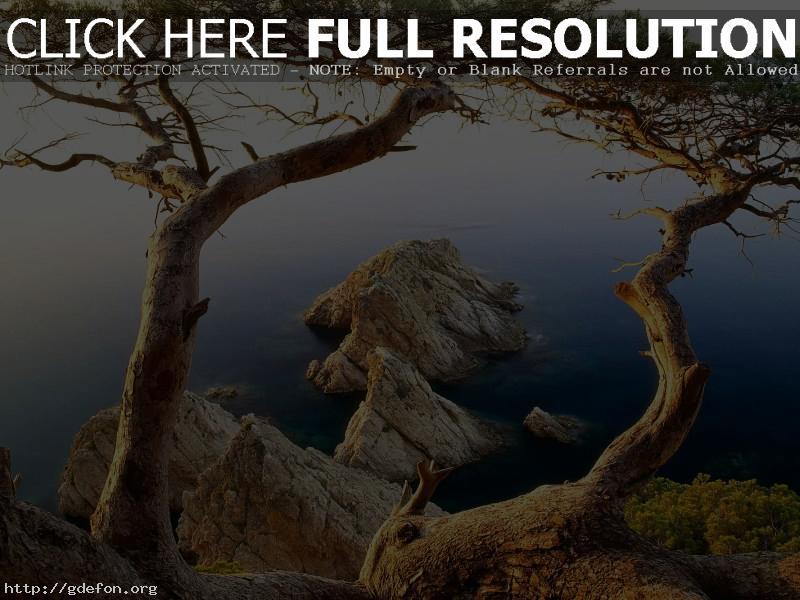 Обои Деревья, море, скалы фото картики заставки