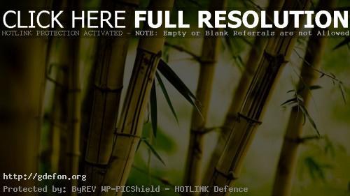 Обои Фото бамбук фото картики заставки