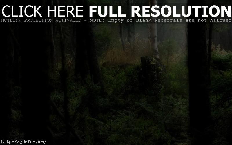 Обои Лес, трава, свет фото картики заставки
