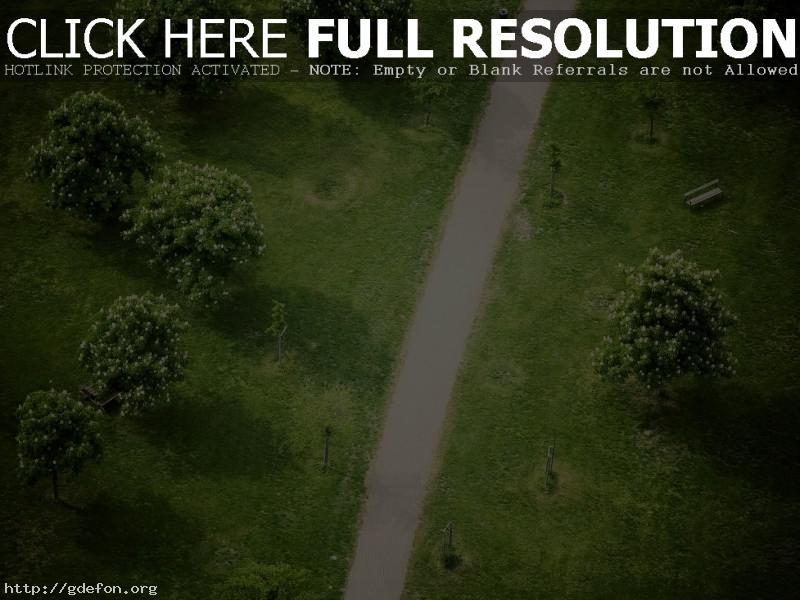 Обои дорожка, деревья, парк фото картики заставки