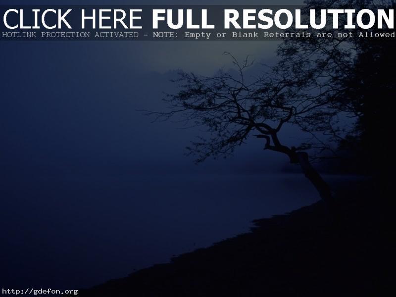 Обои Дерево, берег, туман фото картики заставки