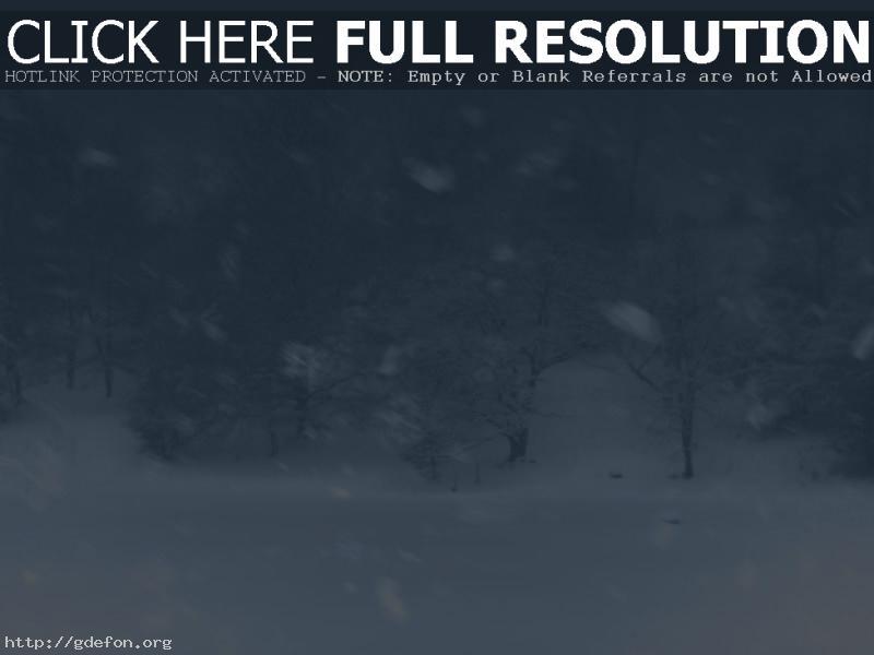 Обои Метель, снег, зима, лес, деревья фото картики заставки