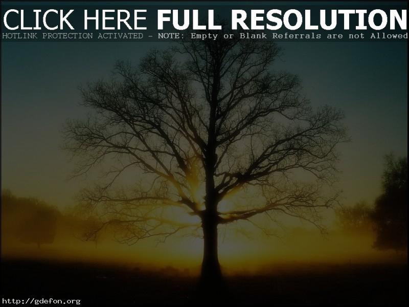 Обои Свет, дерево, солнце фото картики заставки