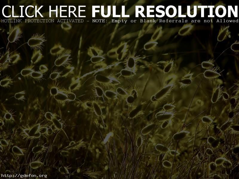 Обои Трава, солнце, колоски фото картики заставки