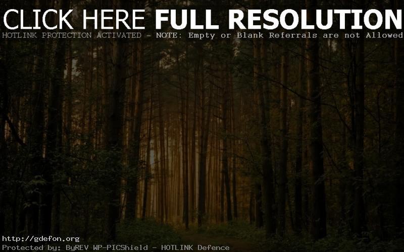 Обои Густой лес фото картики заставки