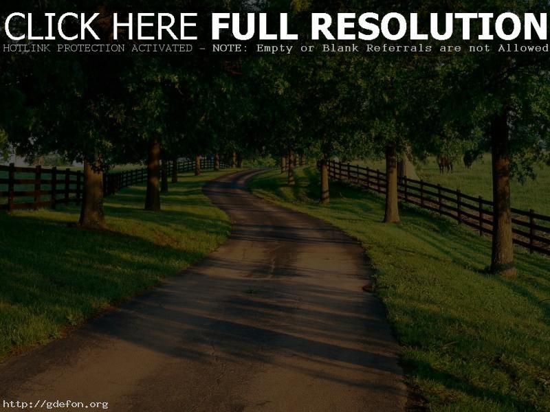 Обои Дорога, деревья, лето фото картики заставки