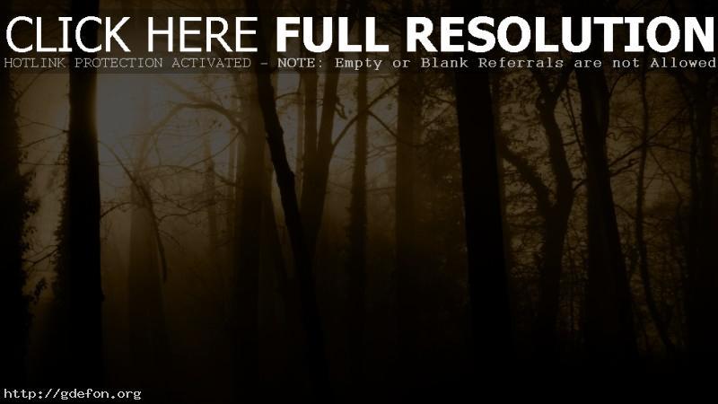 Обои Лес, туман, деревья, лучи, свет фото картики заставки