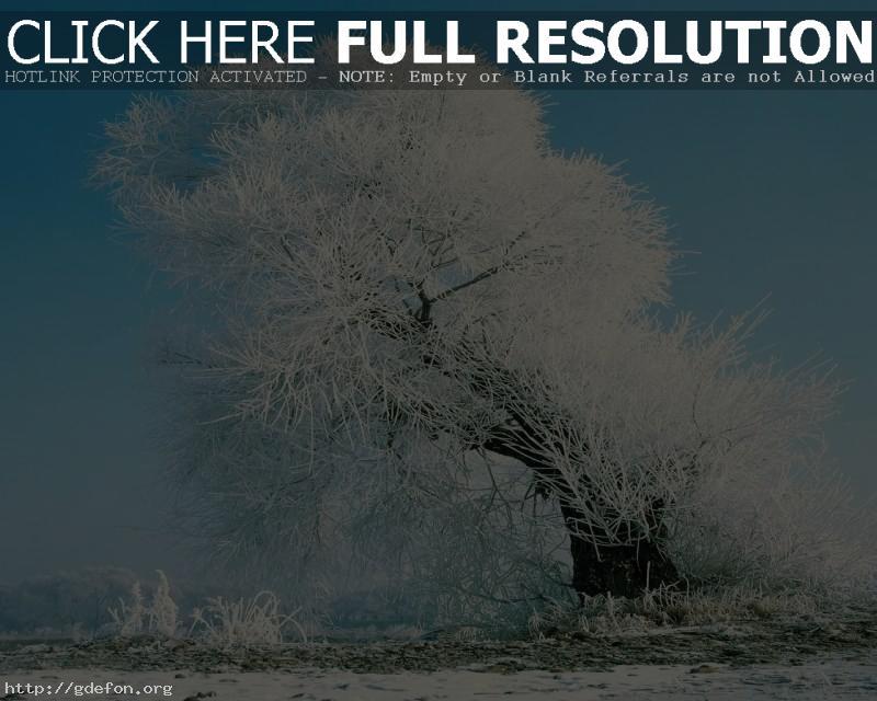 Обои Дерево, снег, иней фото картики заставки
