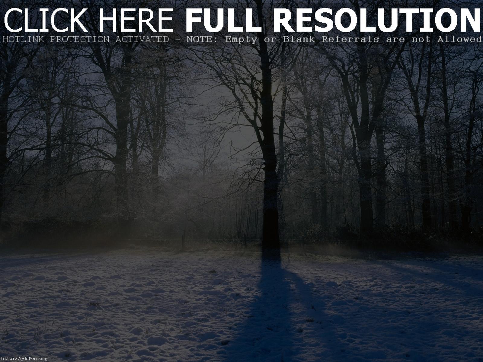 Скачать обои зима снег деревья лучи