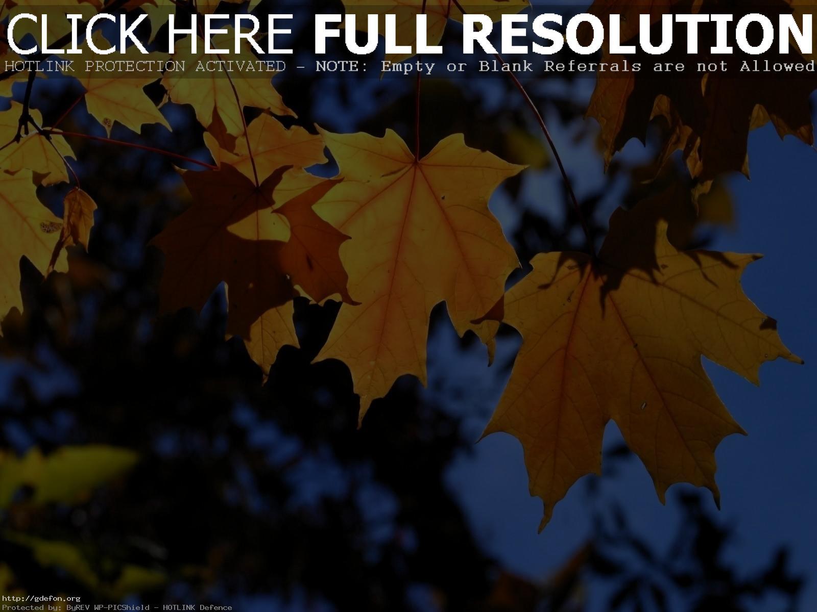 обои на рабочий стол осень листья 1920х1080 15095