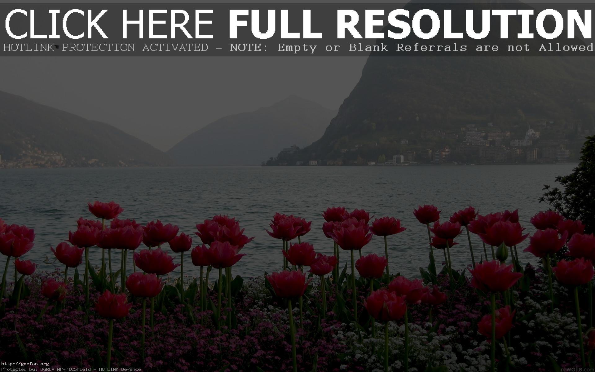 Весна цветы горы вид туман обои на