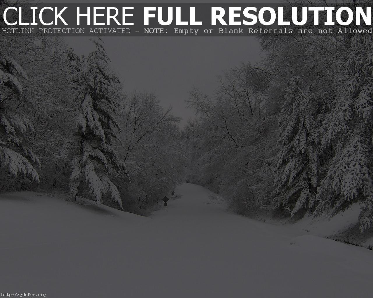 Скачать обои зима деревья дорога