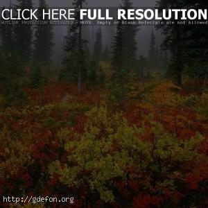 Лес, туман, осень