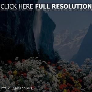 Швейцария, водопад, цветы